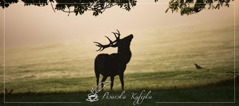 jelen-pisarska-kafejka
